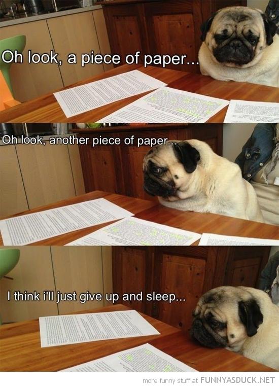 Studying Pug