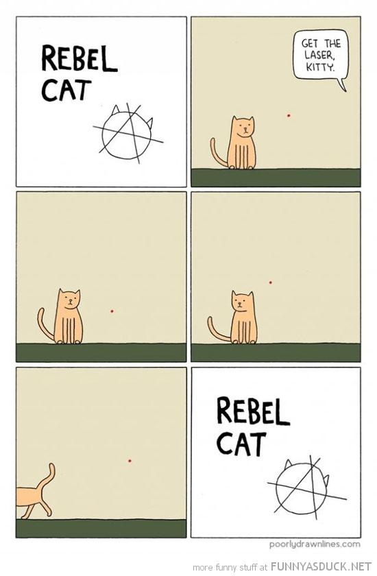 Rebel Cat