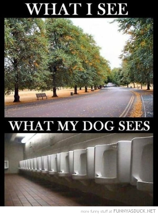 What I See...