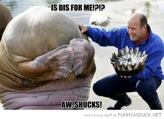 Walrus Birthday