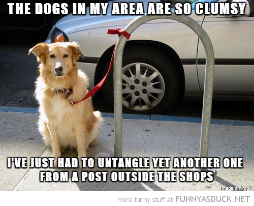 Clumsy Dogs