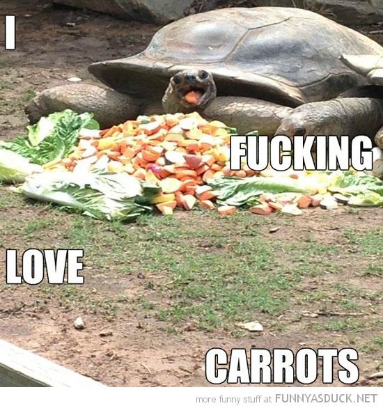 Happiest Turtle Ever