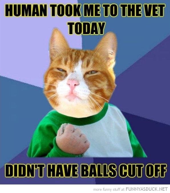 Success Cat