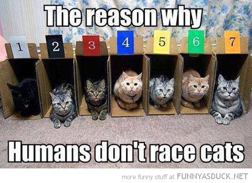 Racing Cats