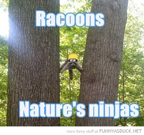 Natures Ninjas