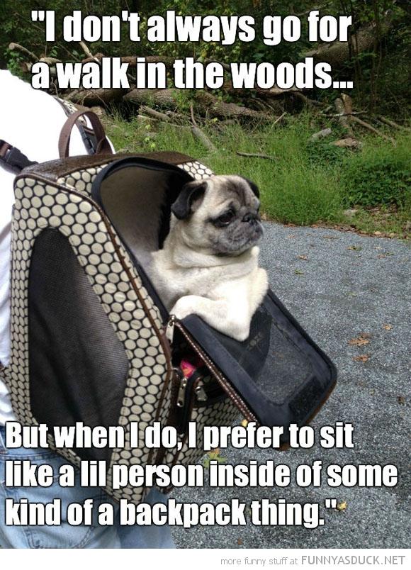Most Interesting Pug