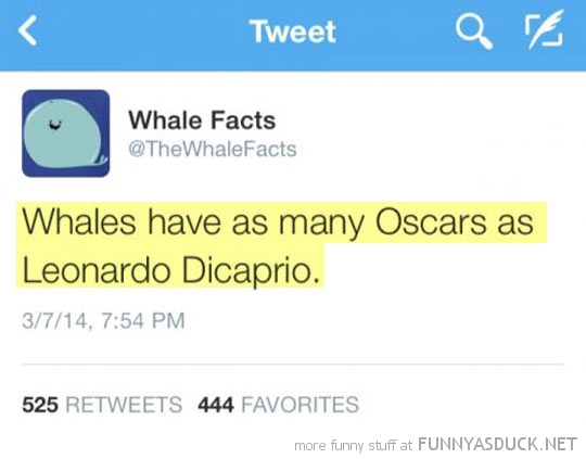 Whale Facts