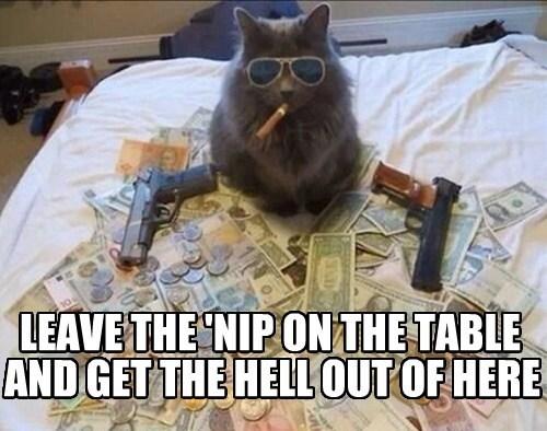 Gangsta Kitty