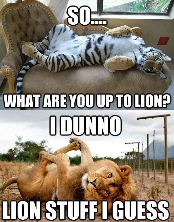 Lion Stuff